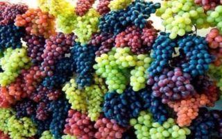 Польза и вред винограда при панкреатите