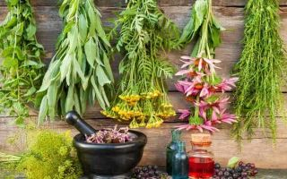Какие травяные сборы помогут при панкреатите