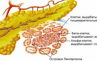 Клетки поджелудочной вырабатывающие инсулин