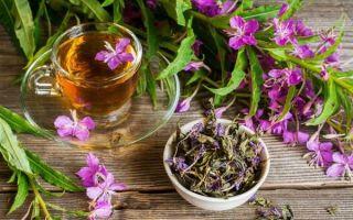 Употребление иван-чая при панкреатите