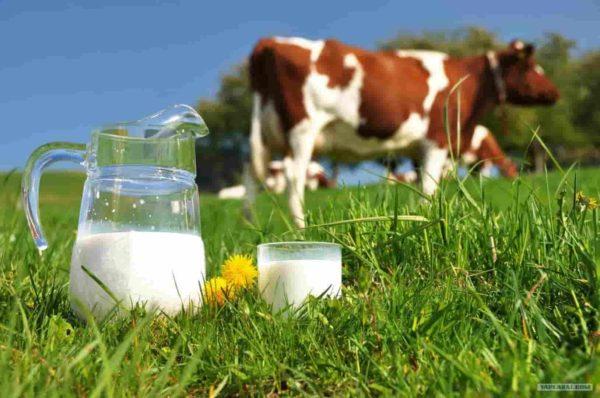 молоко коровье при панкреатите