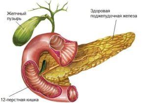 здоровая поджелудочная железа