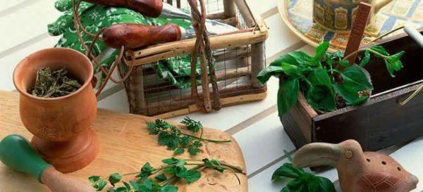сбор и хранение трав