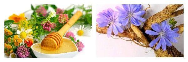 цикорий с медом