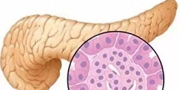 железистая ткань поджелудочной железы