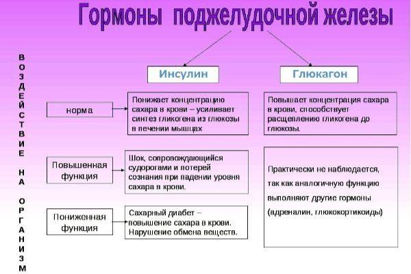 основные гормоны поджелудочной