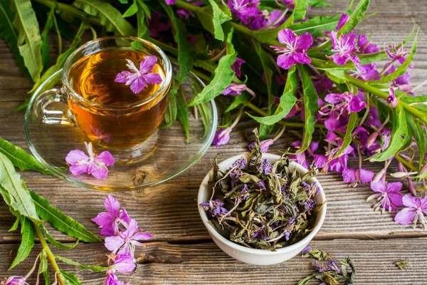 Иван-чай при развитии панкреатита