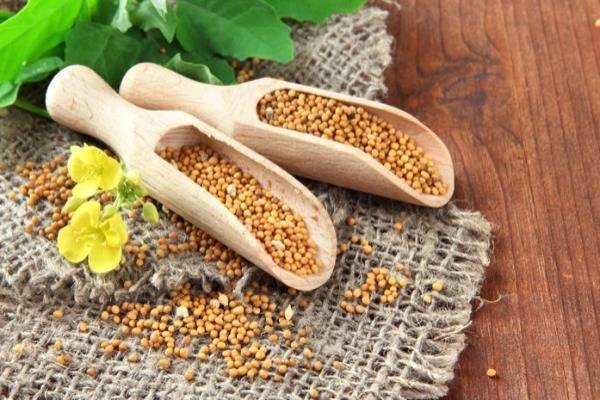 горчичные семена